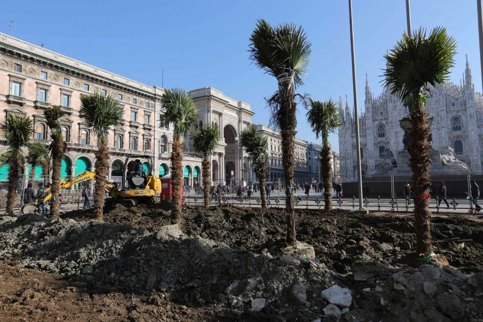 Milano, crescono palme e banani in piazza Duomo