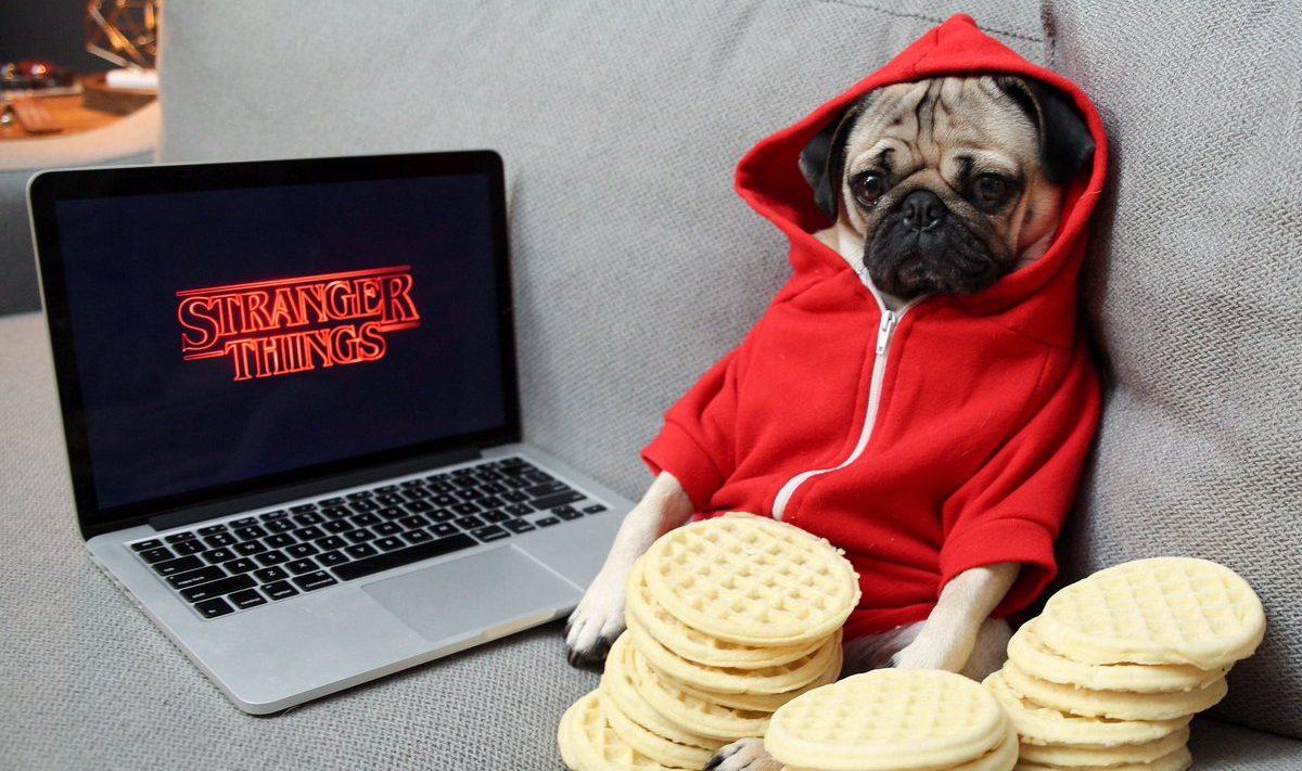 Netflix il compagno ideale è l animale domestico