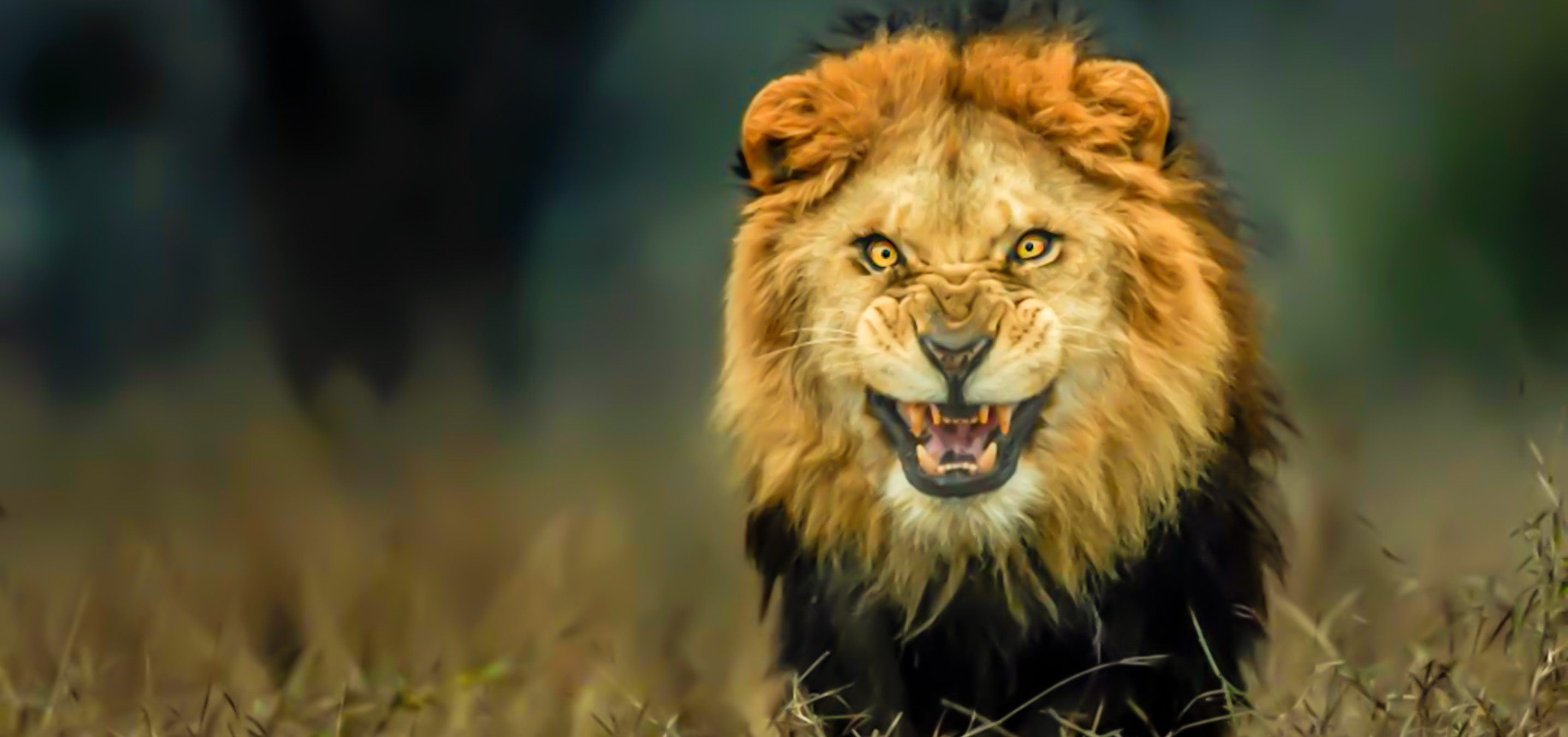 Branco di leoni sbrana bracconieri