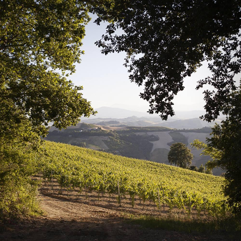 Degustazione di Vino al Museo | YOUparti
