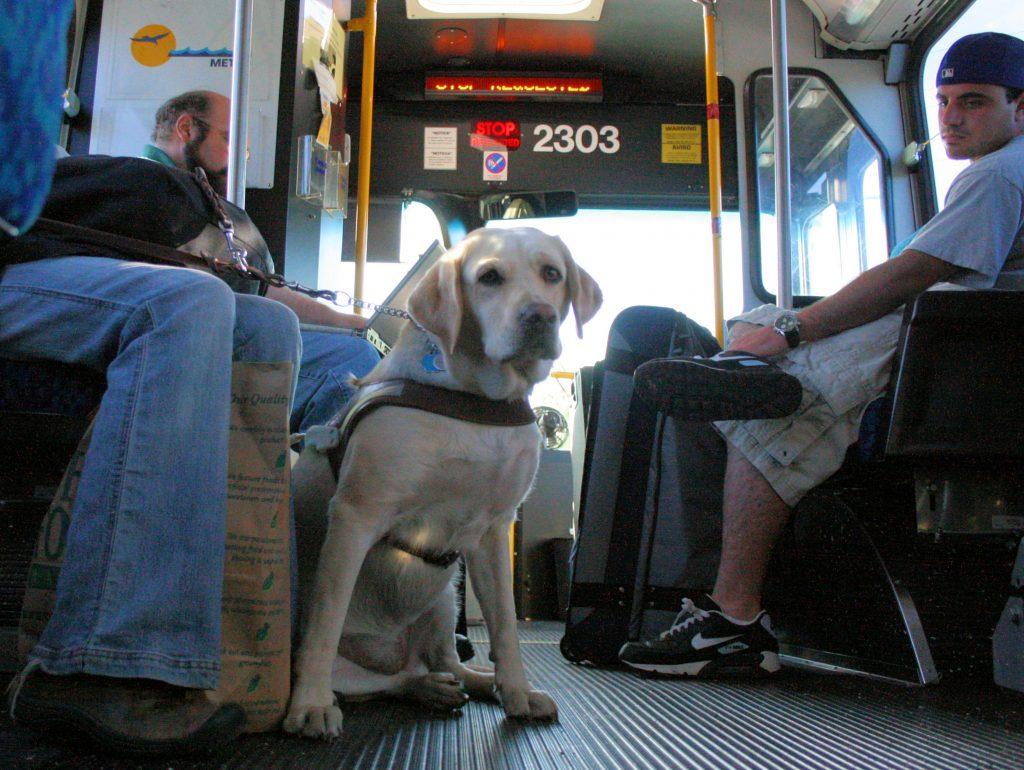 Cani e gatti viaggeranno gratis sui mezzi pubblici