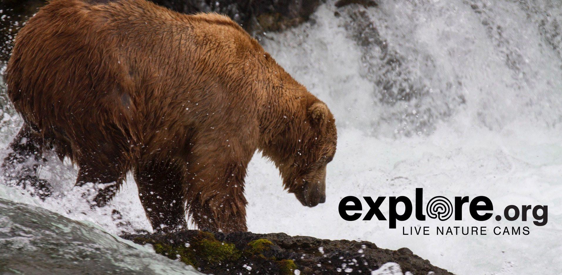 explore il sito con centinaia di webcam sul mondo